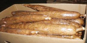 Whole cassava root