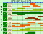 Tree spices harvest calendar