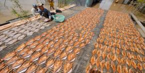 Paradise dried fish festival season