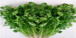Parsley (Celery)