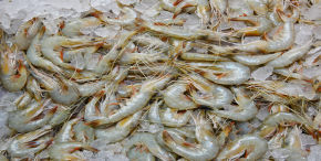 Shrimp in Vietnam