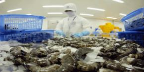 Korea: Potential market for Vietnamese shrimp exports