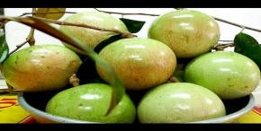 US to import Vietnamese fresh Star Apple fruit