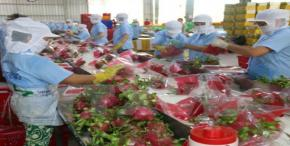 Vietnam targets vegetable, fruit export value at US$3 billion