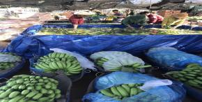 Vietnamese banana exports find new Niche