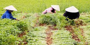 Vietnam, US further agricultural ties