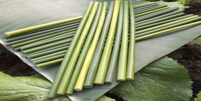 Eco Friendly Straws- GRASS STRAWS