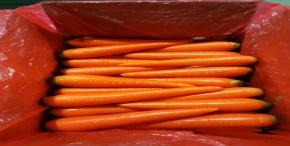 Top 7 Ways Carrot & Carrot Juice Benefit Your Body
