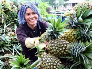 There's no Chinese stimulants in Vietnamese pinapples